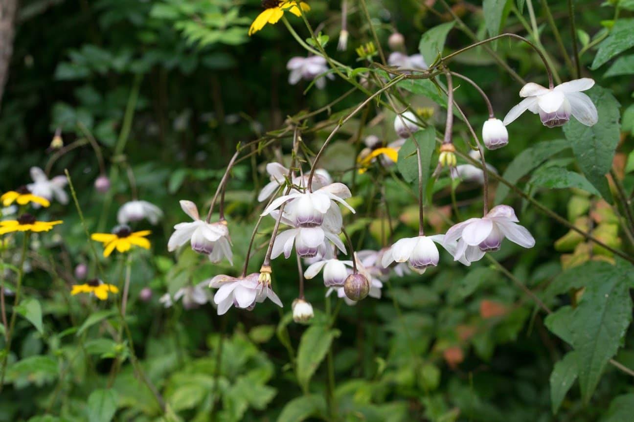 高橋武市さんの植物園・陽殖園(滝上町)北海道の自然風ガーデン