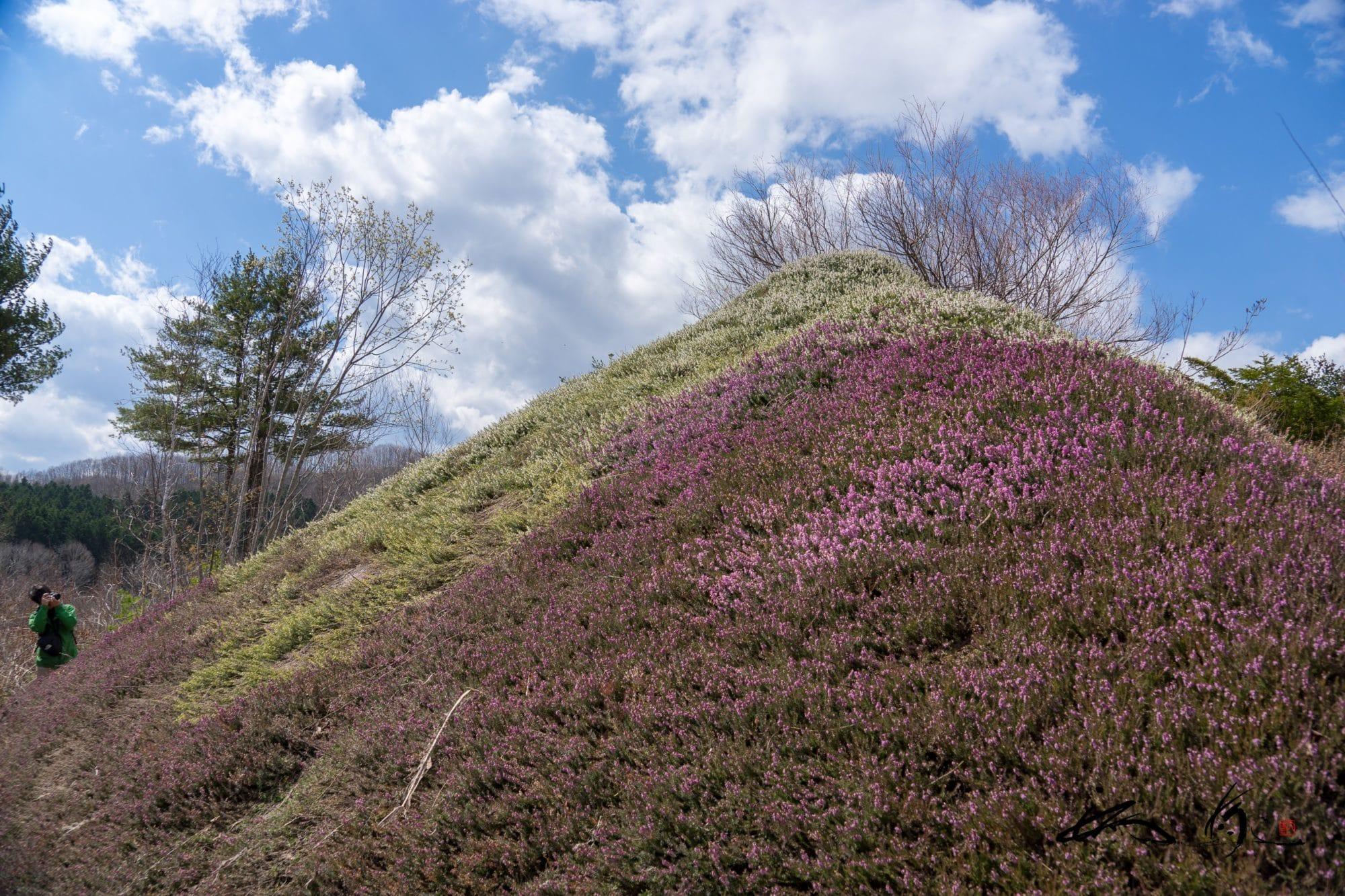 高橋武市さんの陽殖園(滝上町)は毎年4月29日に開園