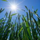 夏至を境にエネルギーの転換!