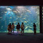 サケのふるさと千歳水族館(千歳市)日本最大級の淡水魚の水族館
