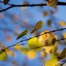 秋色の葉に輝く雨の雫