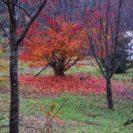 素敵に散りゆく落ち葉たち